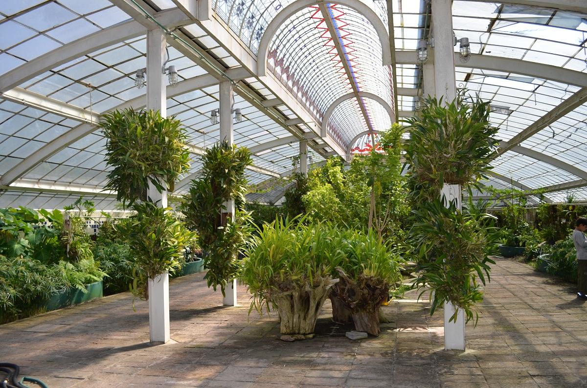 Ciudad verde conoce los jardines bot nicos que puedes for Jardin botanico unam 2015